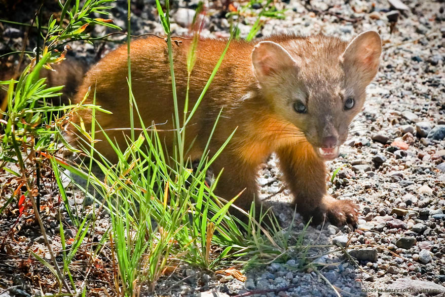 Local Wildlife on Dubois Wyoming Real Estate For Sale